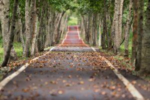 Vackra vägar för utflykter